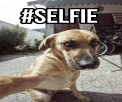 Dogs on Snapchat